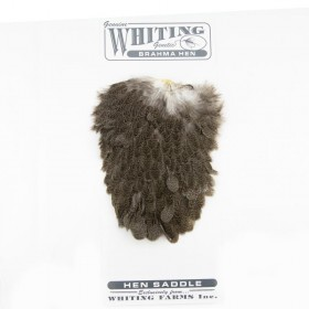 Whiting Brahma Hennen Sattel, mottled grey