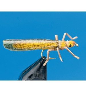 Giant Stonefly, golden