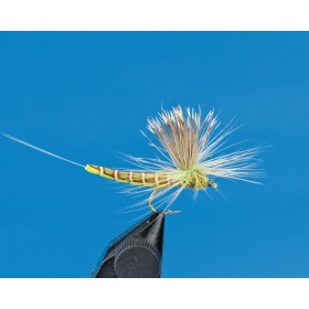 "Mayfly ""Hairwing"""