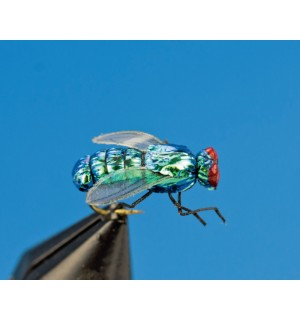 Blow Fly, realistic